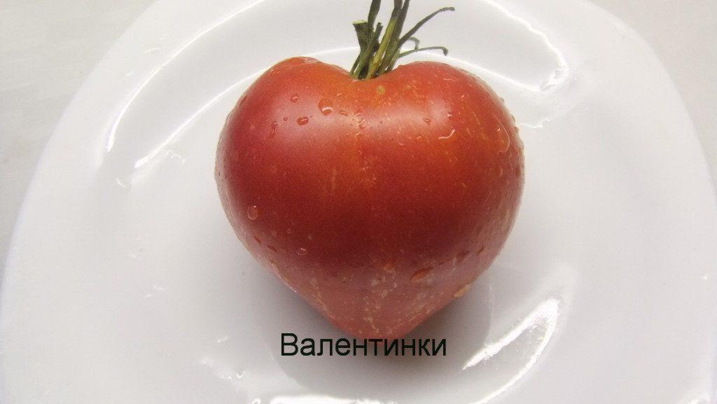 помидоры Валентинки фото