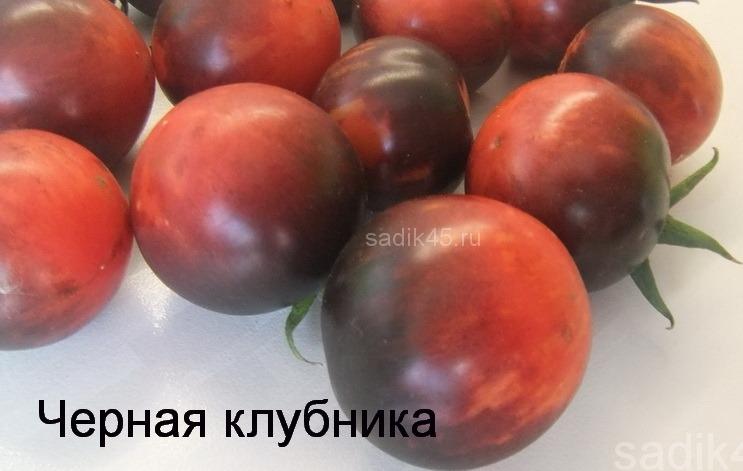 помидоры Черная клубника фото