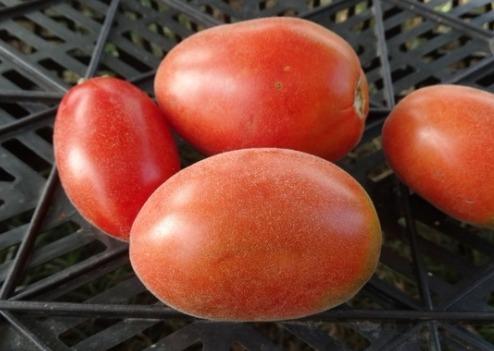 помидоры мохнатый шмель фото