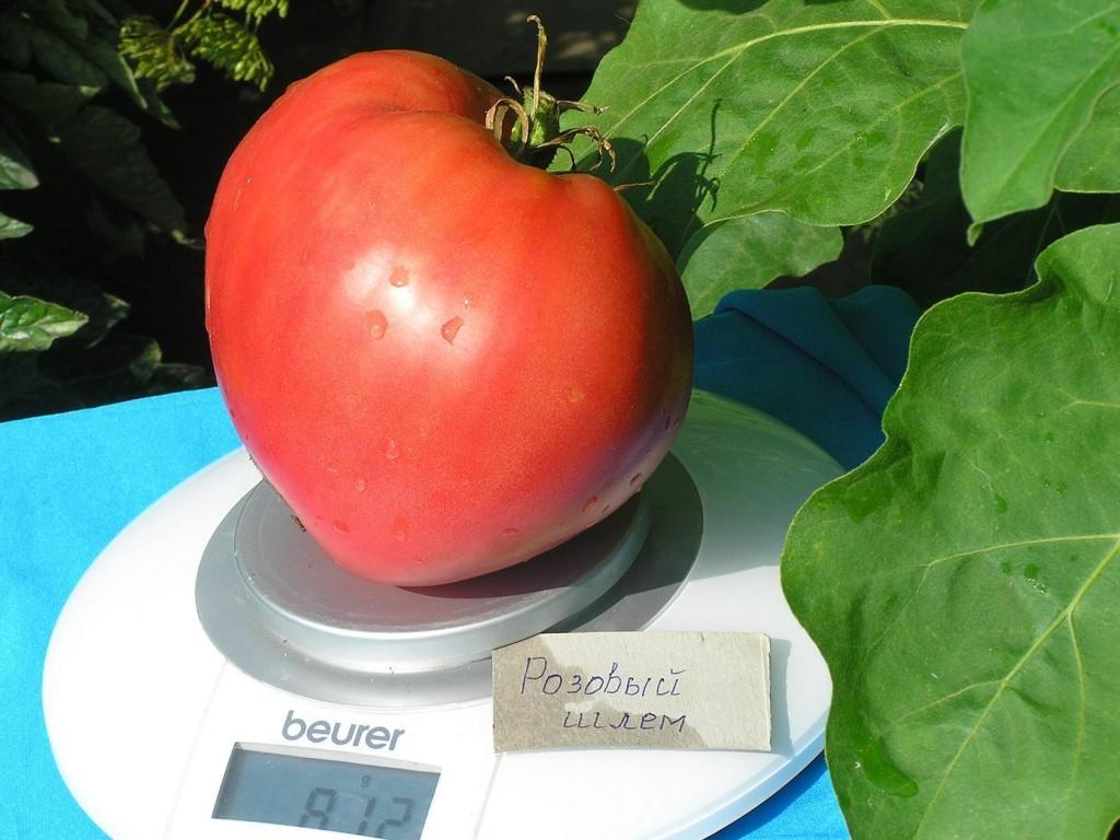 томаты розовый шлем фото на весах