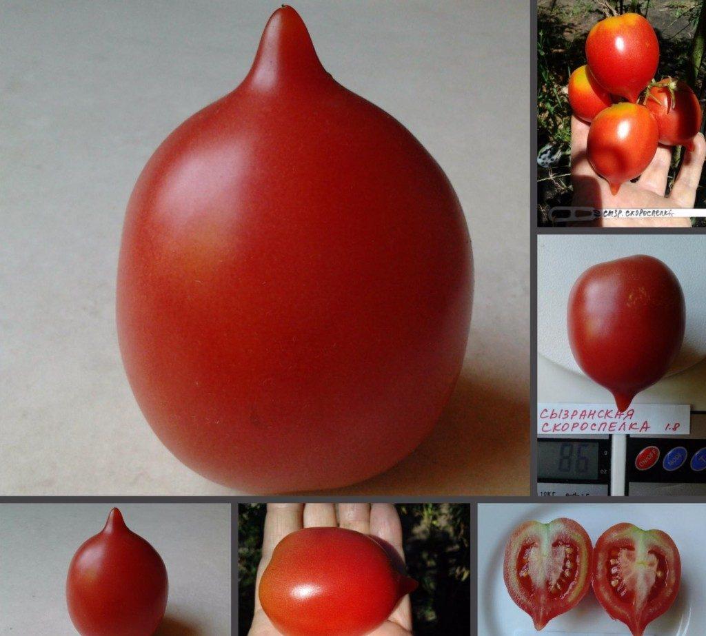 помидоры сызранская скороспелка фото