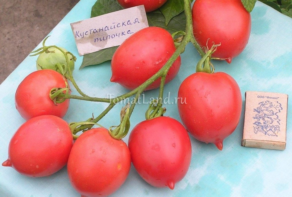 помидоры кустанайская пипочка фото