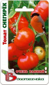 томаты снегирек фото