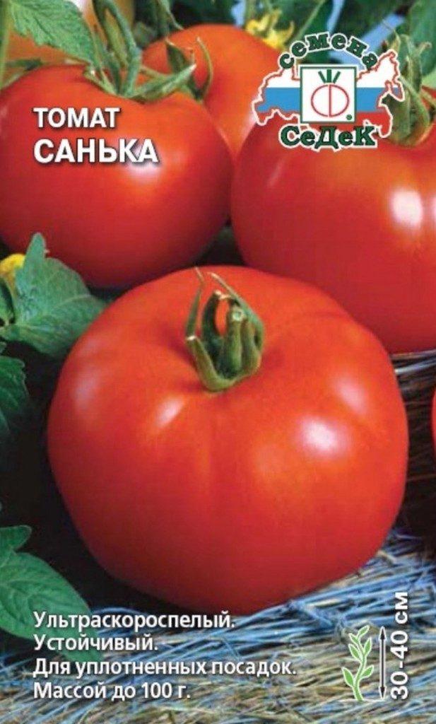 помидор санька фото