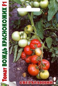 томаты вождь краснокожих фото