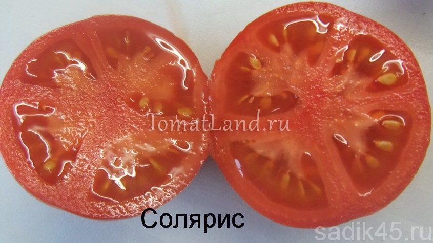 томат сорт солярис семена