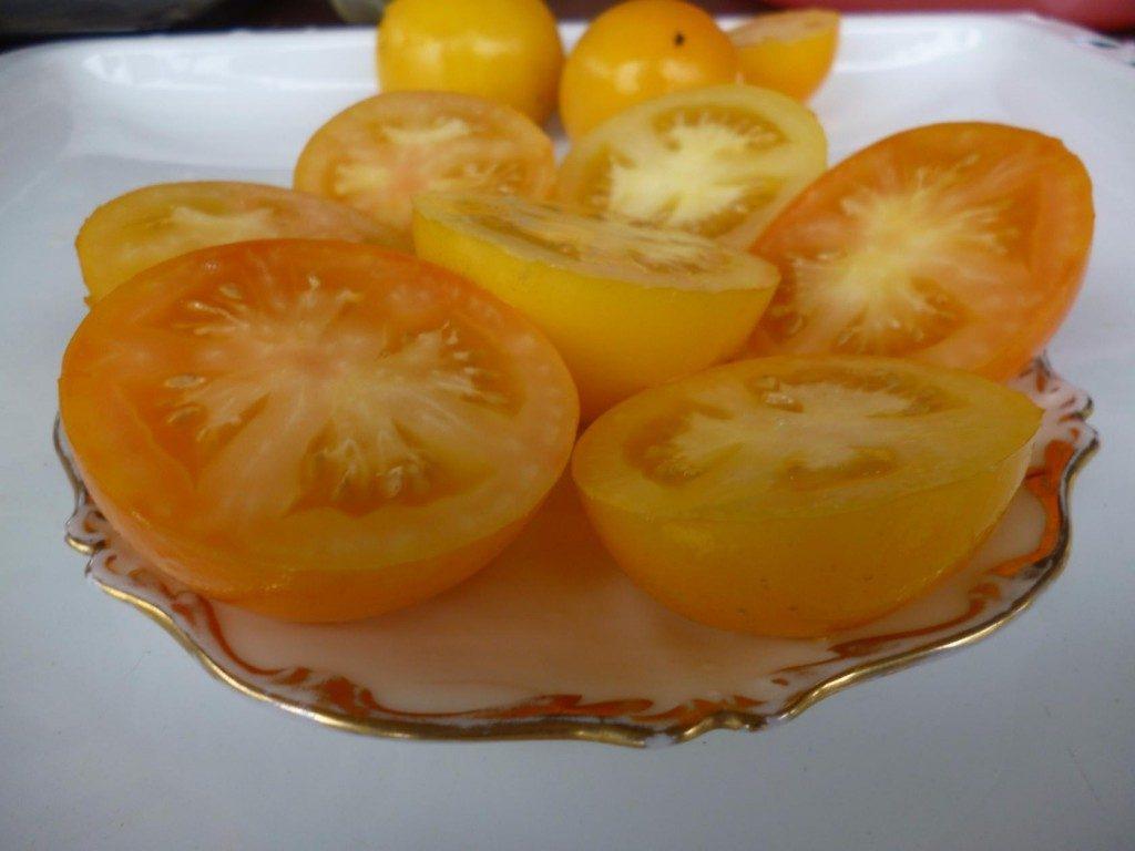помидоры лапа кенгуру желтая фото