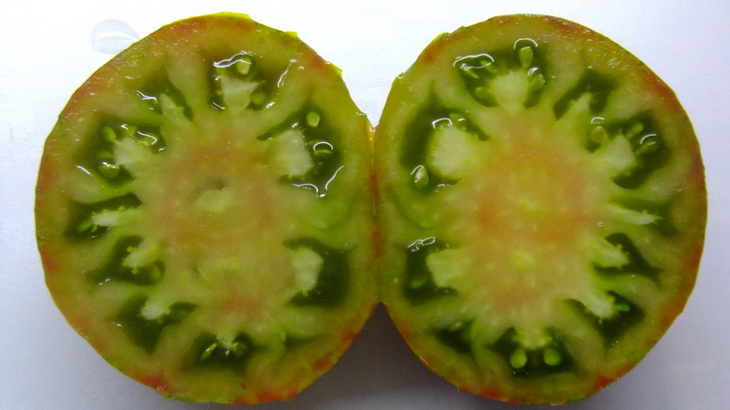 помидор Лето любви фото