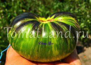 томаты зеленая богиня ксанаду фото