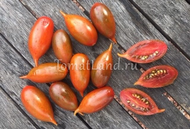 томаты эмалия фото
