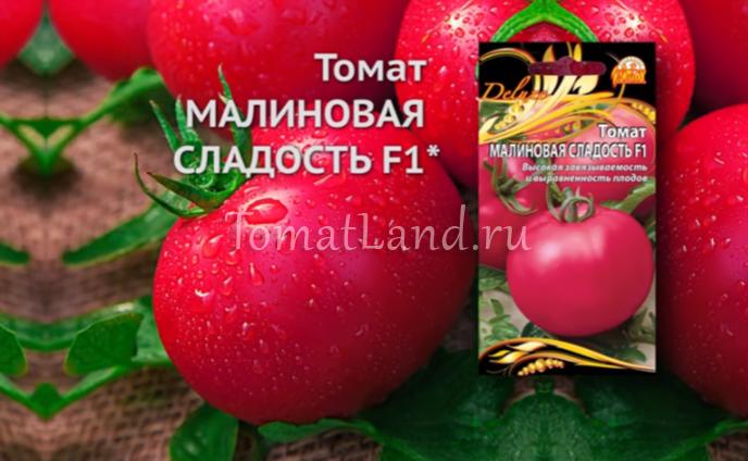 помидоры малиновая сладость фото