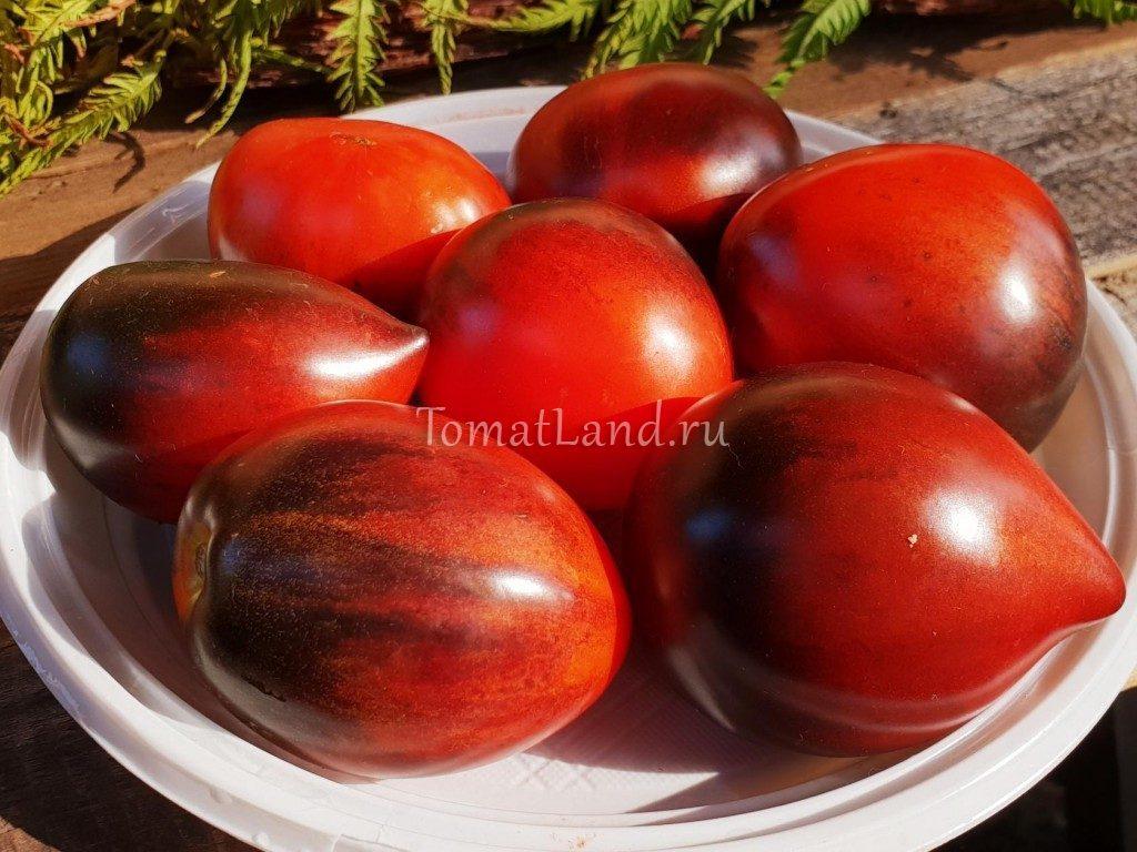 томаты паскаль из пикардии фото описание
