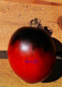 помидор паскаль из пикардии фото