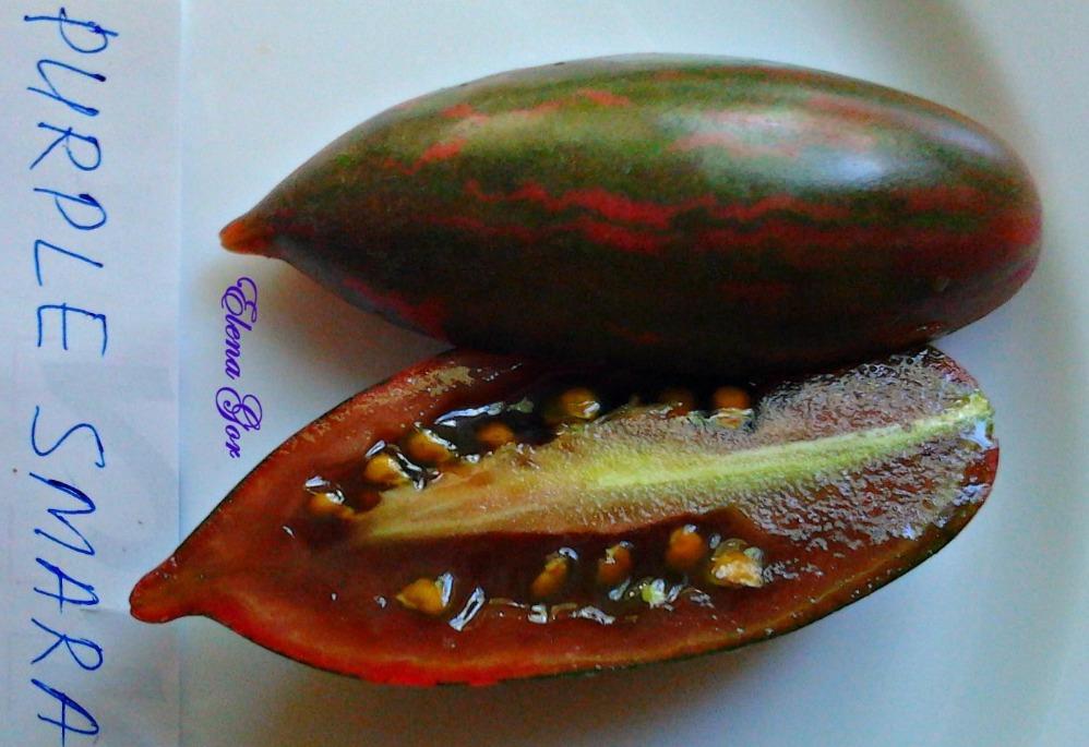 томат фиолетовый смарагд фото