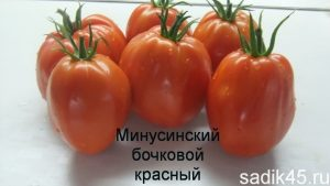 помидоры сорт бочковой минусинский