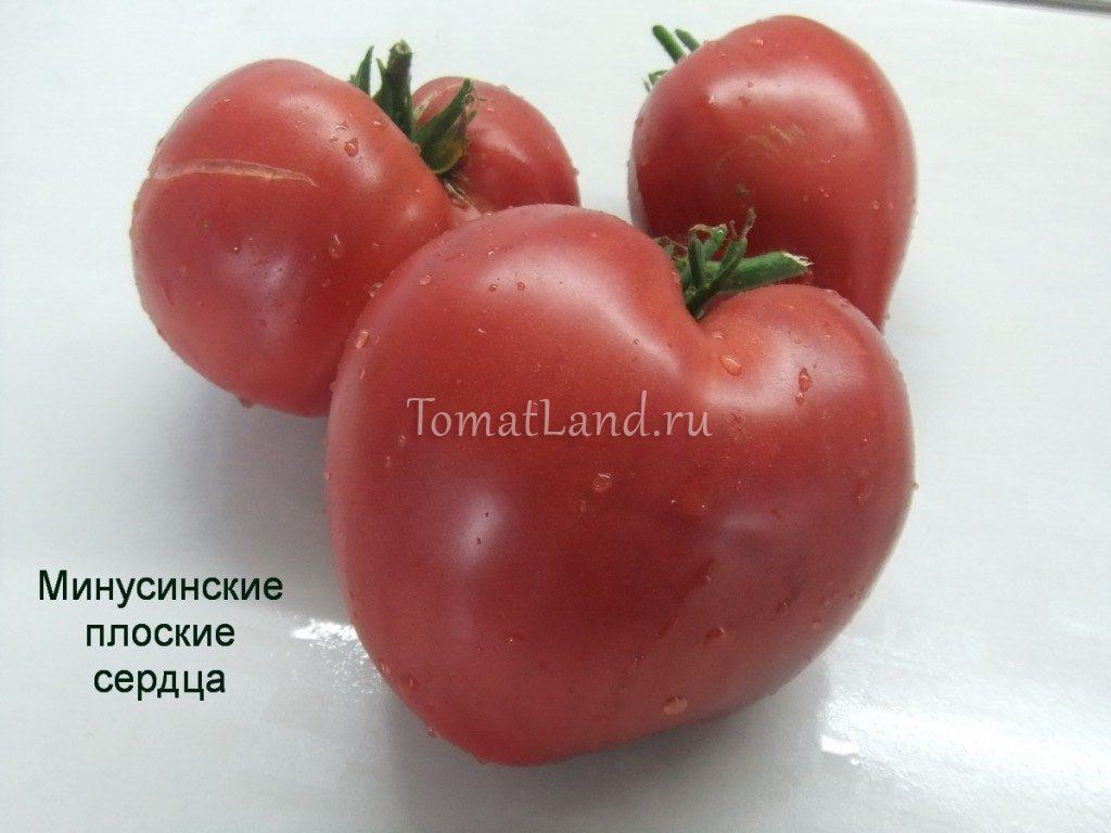 помидоры минусинские плоские сердца фото