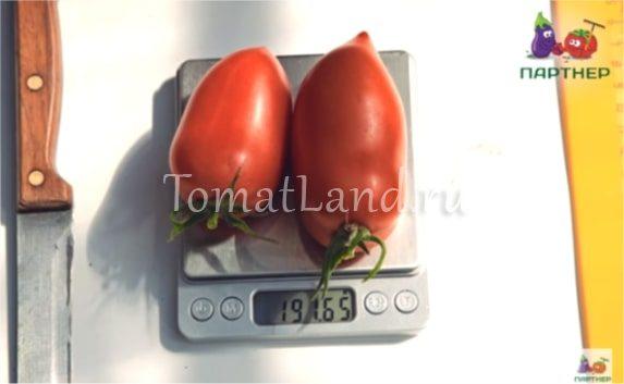 томат агафья фото на весах