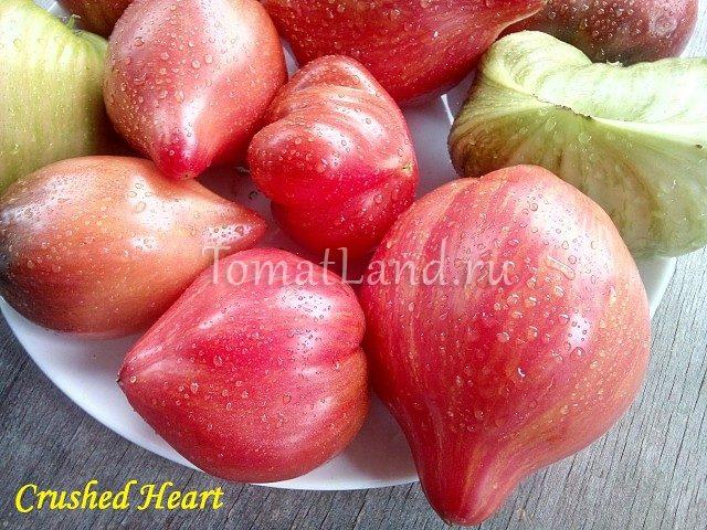 помидоры дробленое сердце характеристика фото