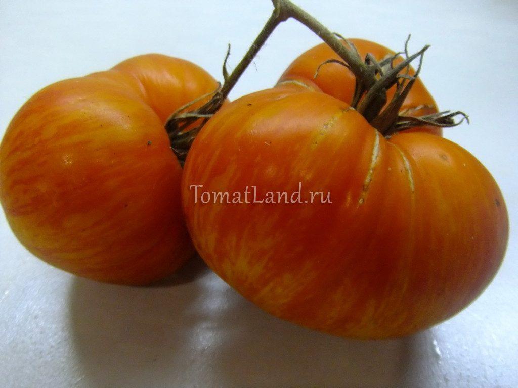 помидоры чудо арканзаса фото отзывы характеристика