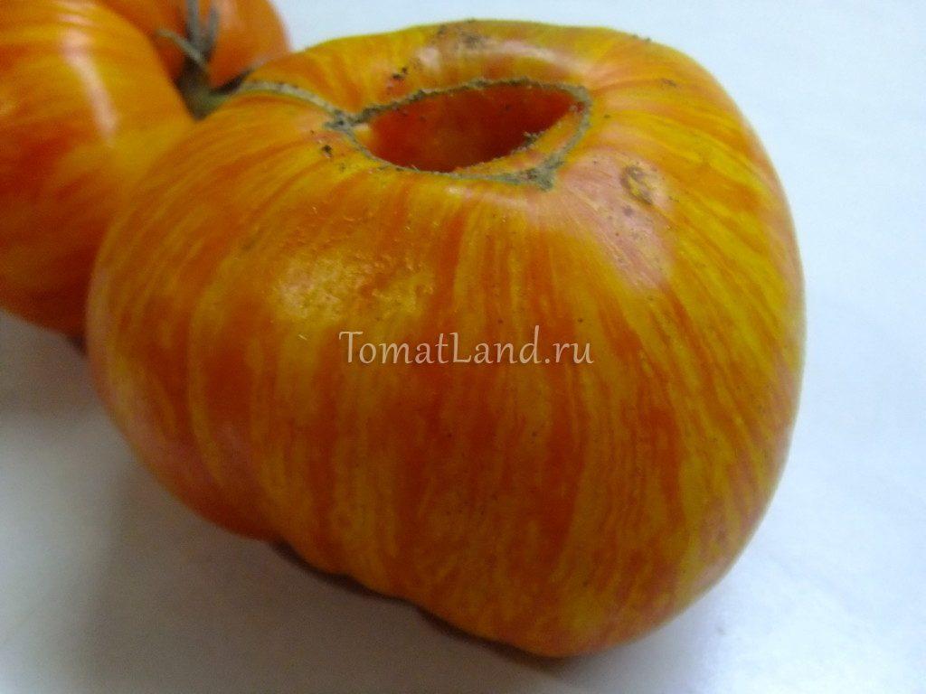 томаты чудо арканзаса фото описание сорта