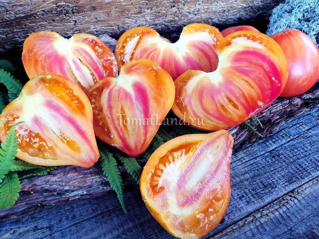 томаты полосаты оксхарт выращивание и уход