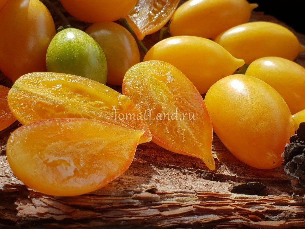 помидор сладкий крем фото