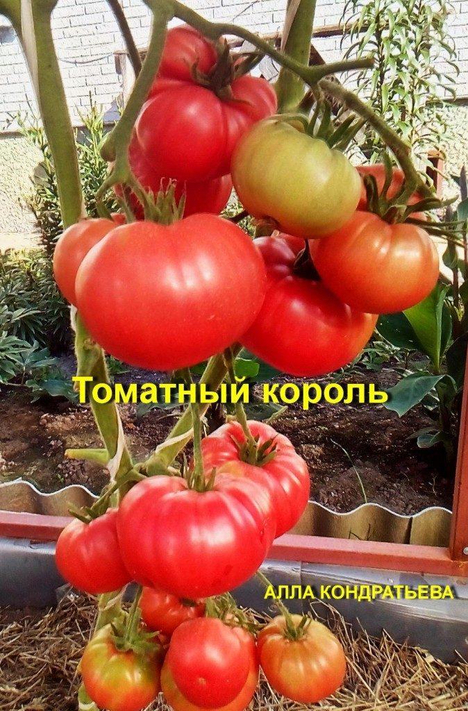 томатный король фото отзывы