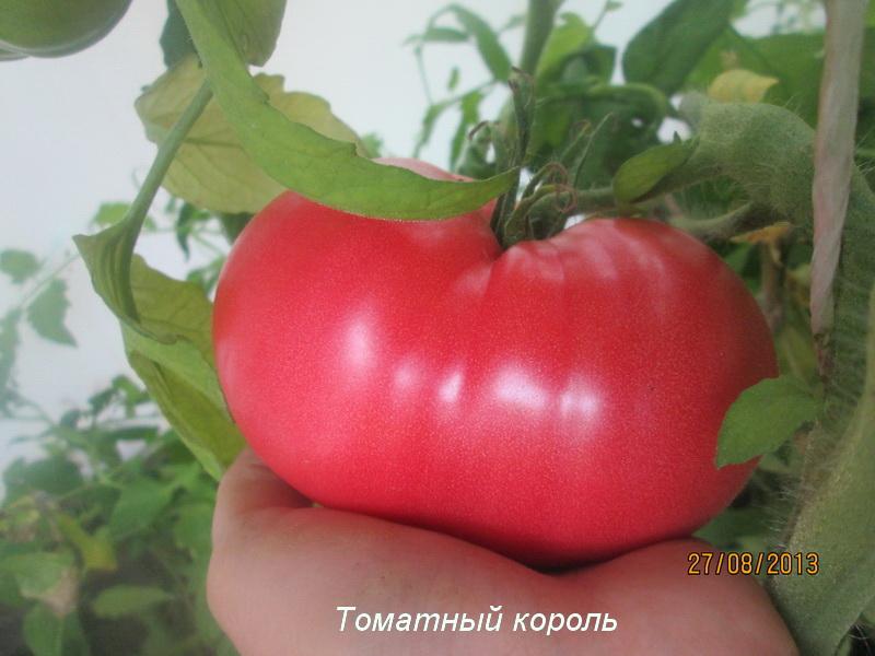 помидоры томатный король отзывы