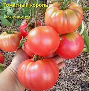 помидор томатный король характеристика