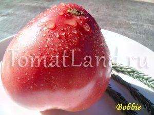помидоры бобби фото отзывы описание