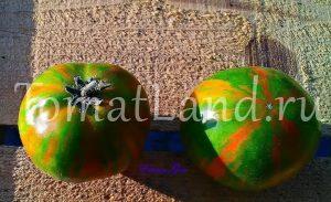 помидоры афтершок фото отзывы