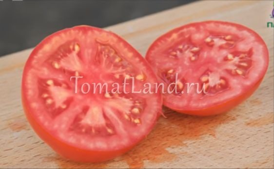 томат верочка фото в разрезе