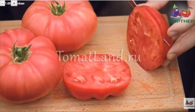 томат скворец фото отзывы выращивание