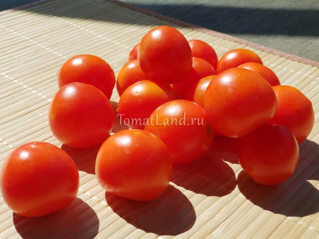 томаты 42 дня отзывы фото