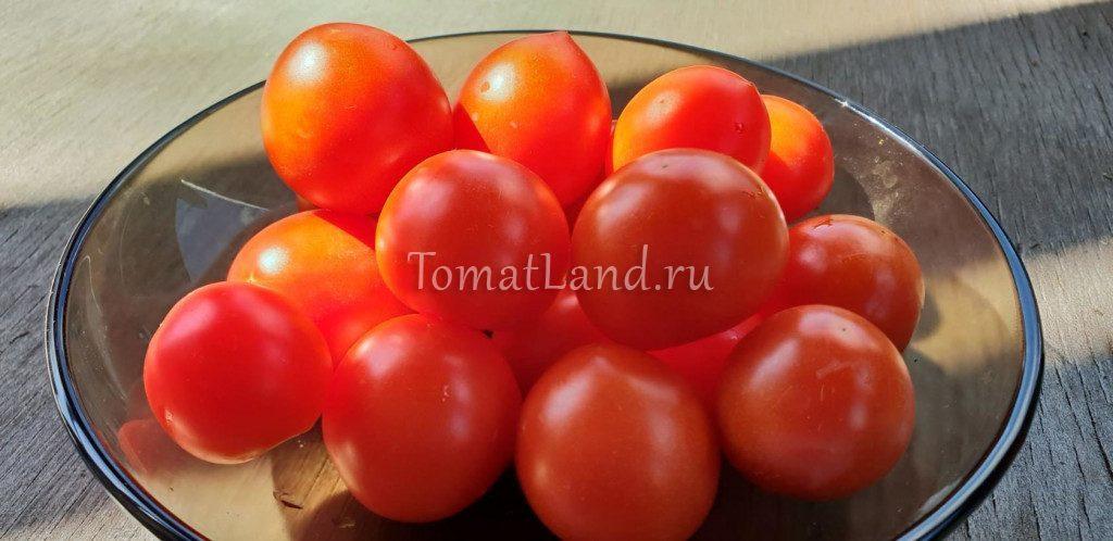 томат 42 дня фото описание