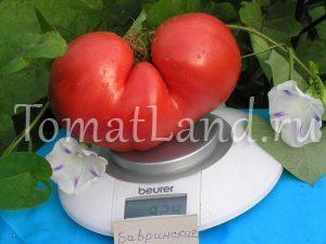 помидоры бавринские фото отзывы