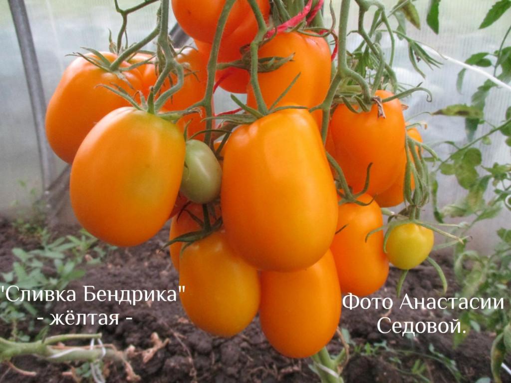 сорт помидор сливка отзывы