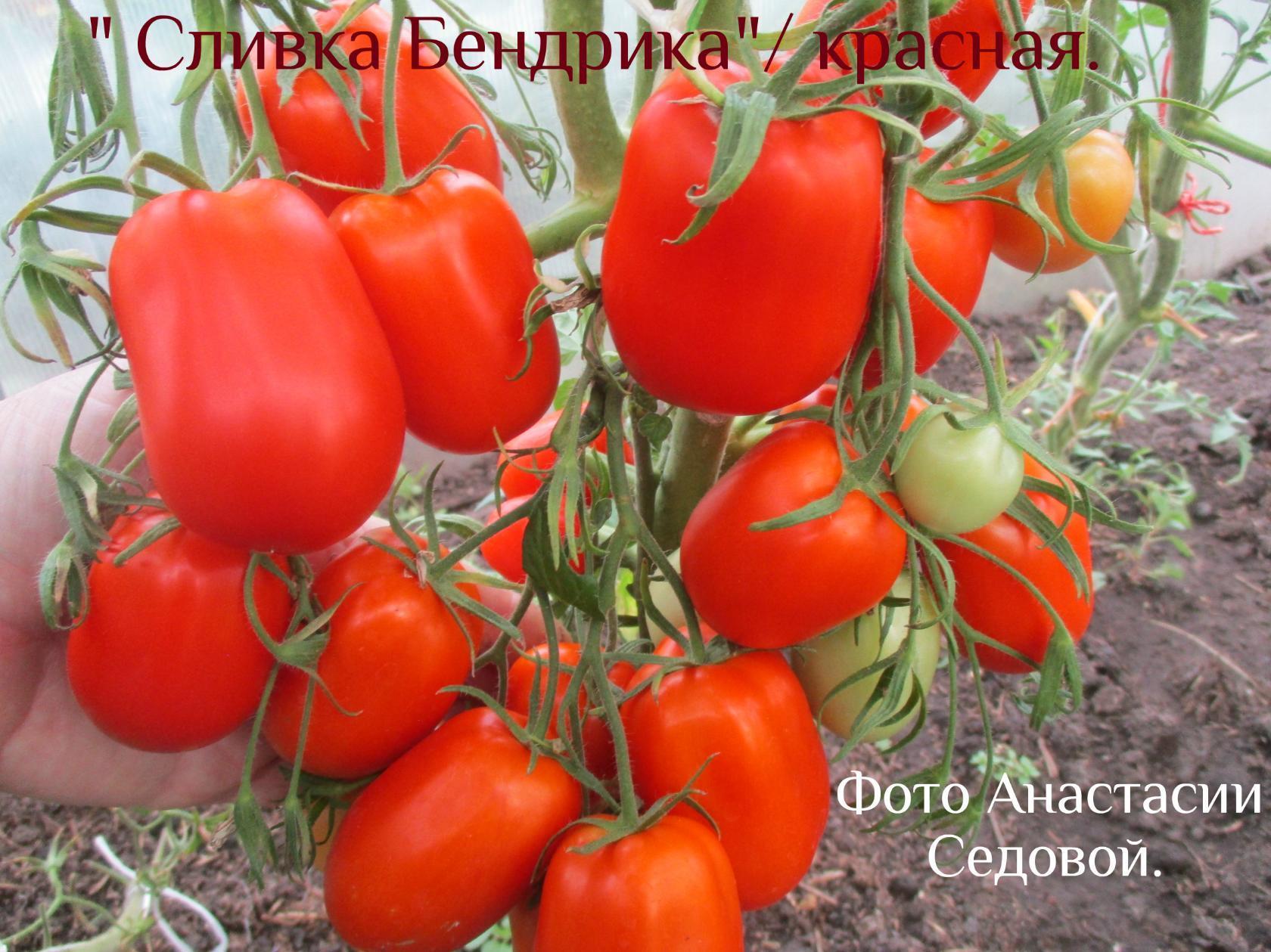 помидоры красные щечки описание сорта фото отзывы