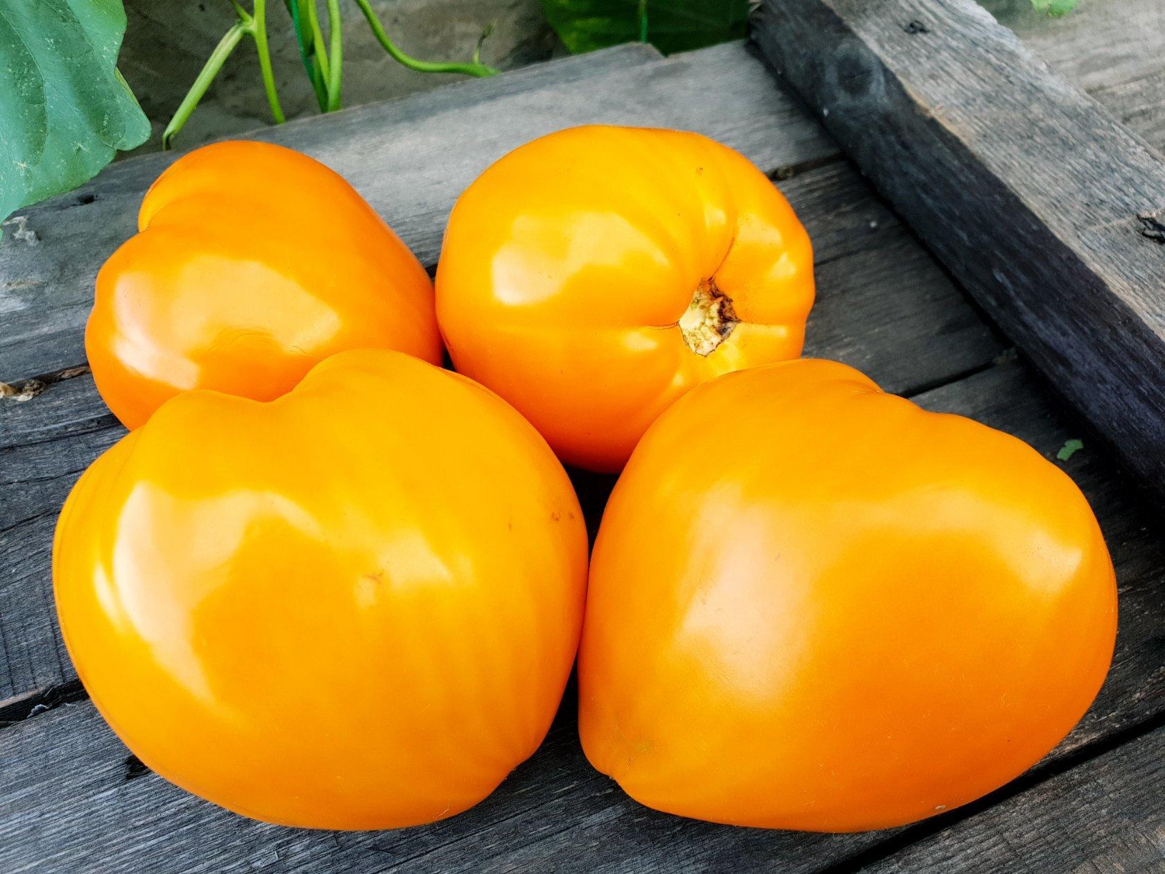 томаты ночная свеча описание и характеристика
