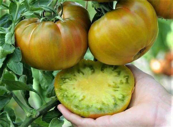 томаты ромовая баба в разрезе фото