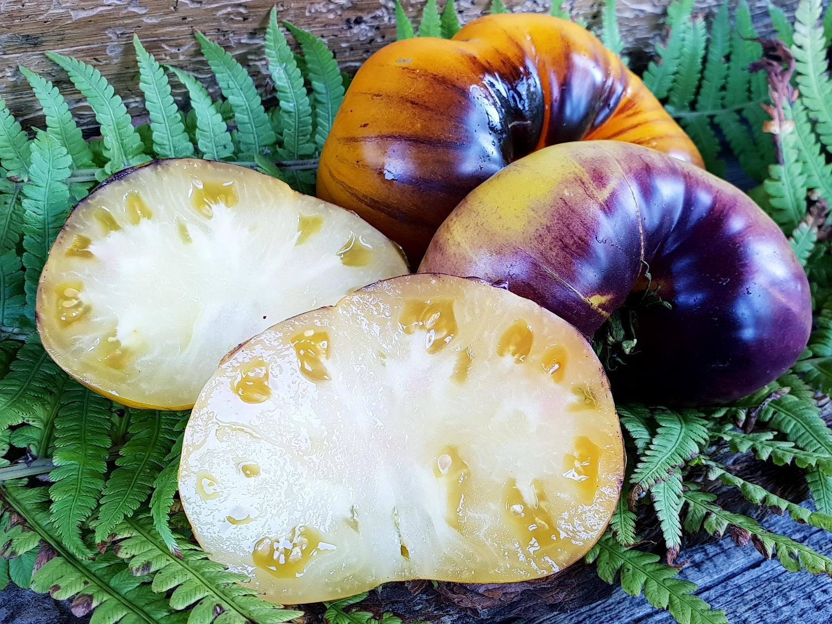 помидор пурпурный восход фото отзывы